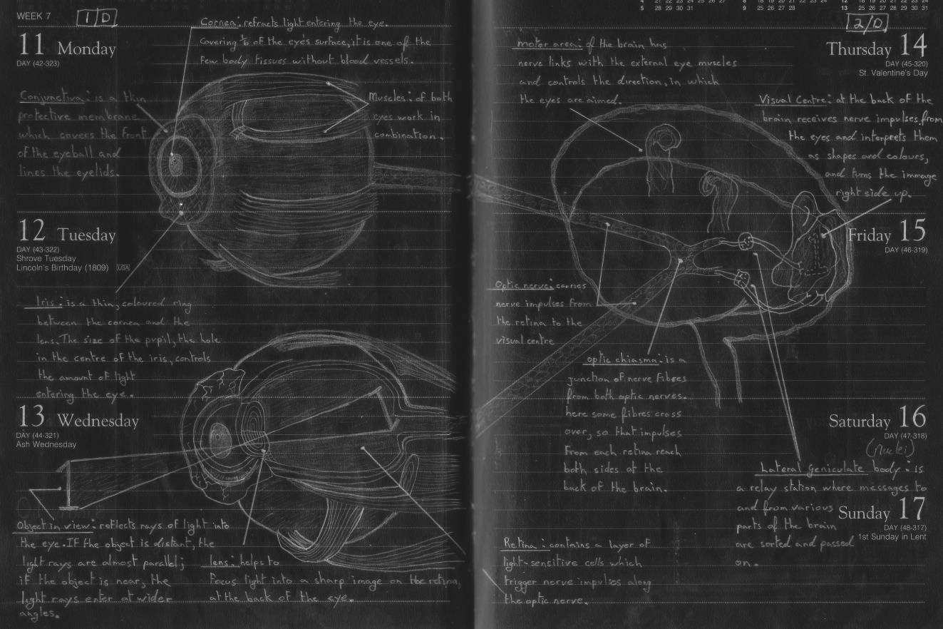 Plate 7 diagram of the human eye how the human eye works ccuart Choice Image